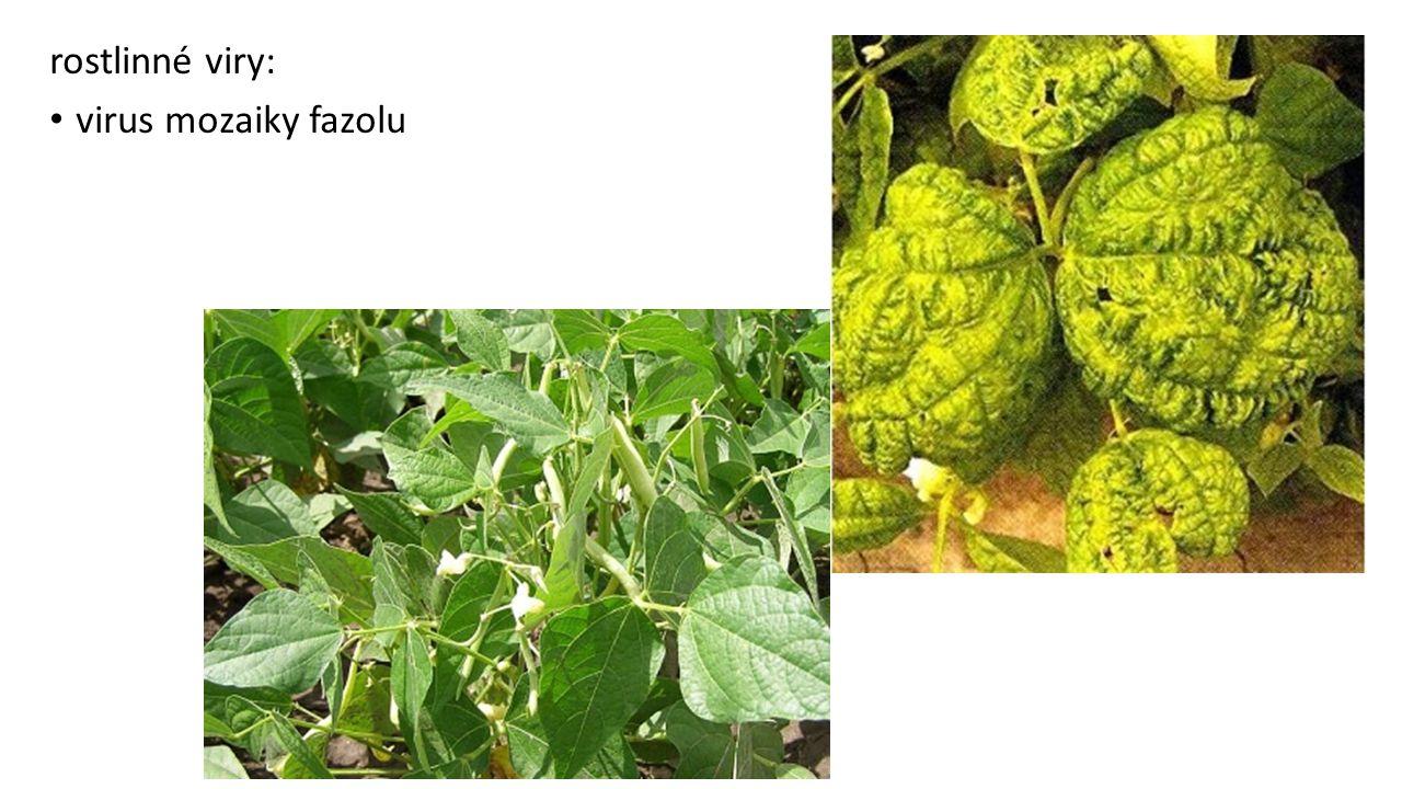 rostlinné viry: virus mozaiky fazolu