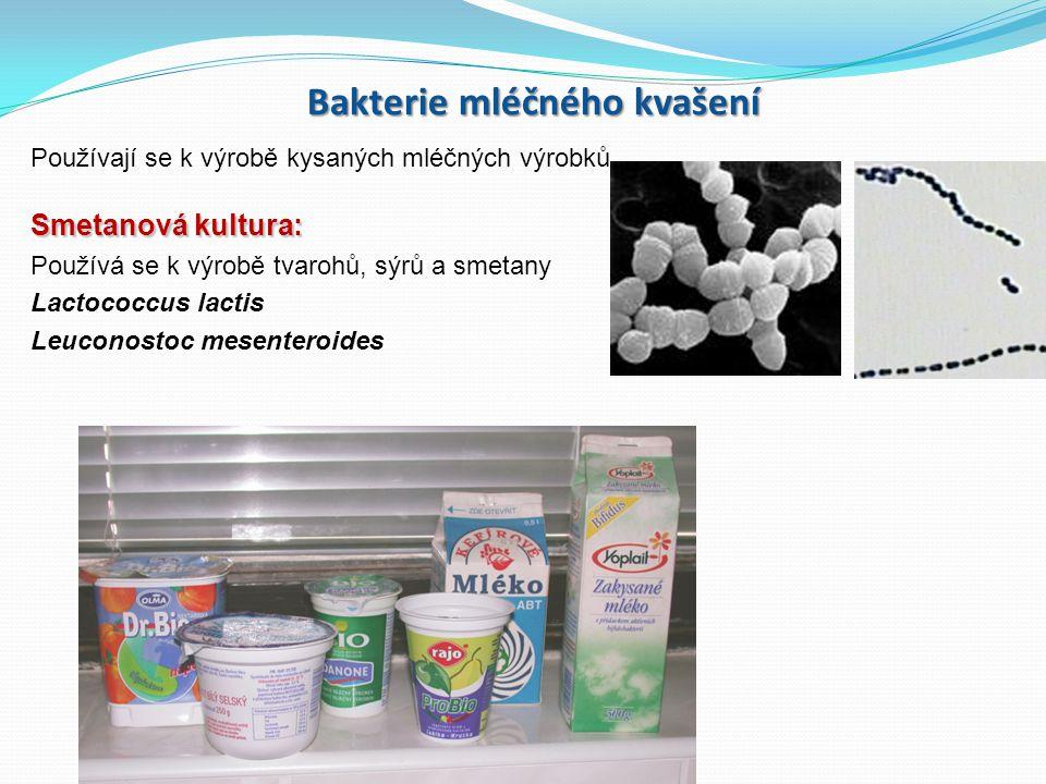 Bakterie mléčného kvašení