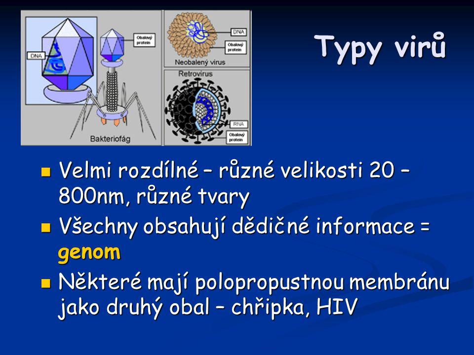Typy virů Velmi rozdílné – různé velikosti 20 – 800nm, různé tvary