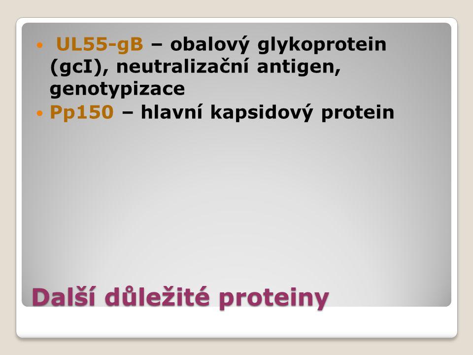 Další důležité proteiny