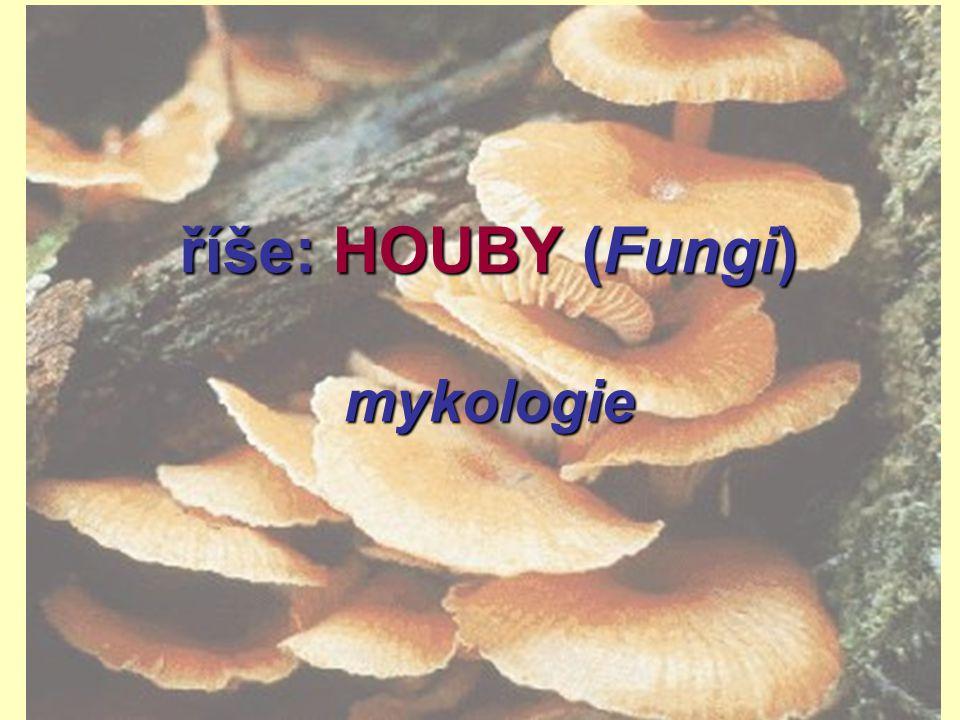 říše: HOUBY (Fungi) mykologie