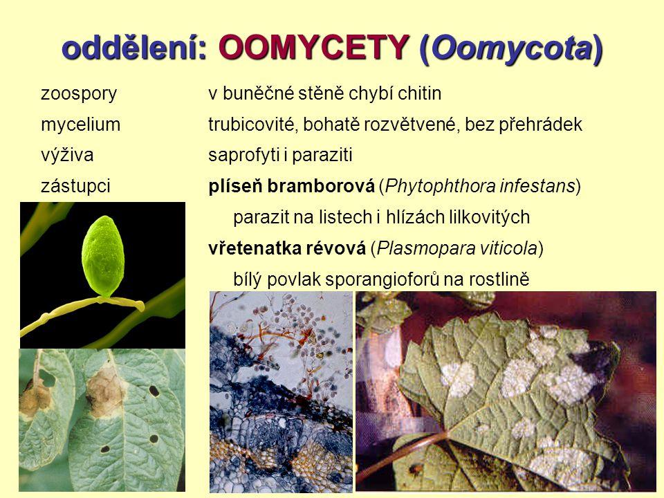 oddělení: OOMYCETY (Oomycota)