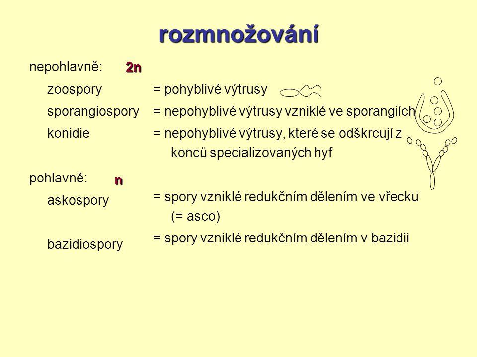 rozmnožování nepohlavně: zoospory sporangiospory konidie pohlavně: