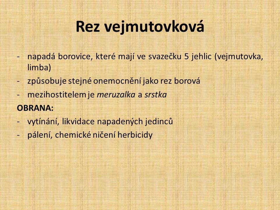 Rez vejmutovková napadá borovice, které mají ve svazečku 5 jehlic (vejmutovka, limba) způsobuje stejné onemocnění jako rez borová.