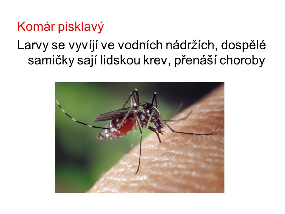 Komár pisklavý Larvy se vyvíjí ve vodních nádržích, dospělé samičky sají lidskou krev, přenáší choroby.