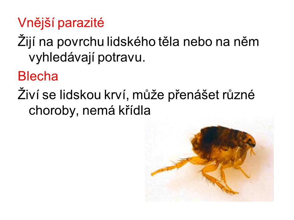 Vnější parazité Žijí na povrchu lidského těla nebo na něm vyhledávají potravu. Blecha.