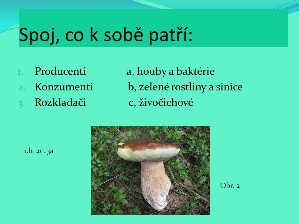 Spoj, co k sobě patří: Producenti a, houby a baktérie