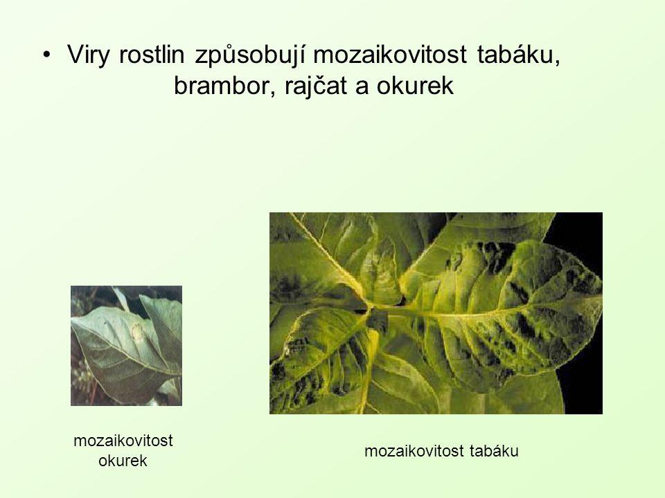 Viry rostlin způsobují mozaikovitost tabáku, brambor, rajčat a okurek