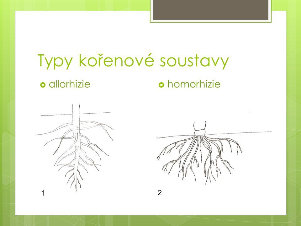 Typy kořenové soustavy