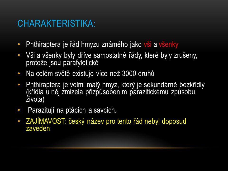 CHARAKTERISTIKA: Phthiraptera je řád hmyzu známého jako vši a všenky