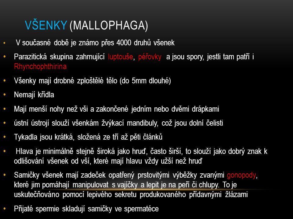 Všenky (Mallophaga) V současné době je známo přes 4000 druhů všenek.
