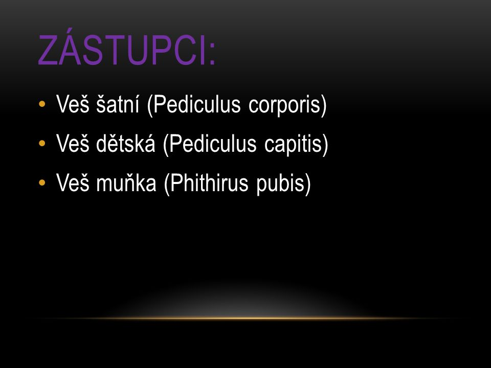 Zástupci: Veš šatní (Pediculus corporis)
