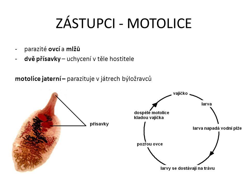 ZÁSTUPCI - MOTOLICE parazité ovcí a mlžů