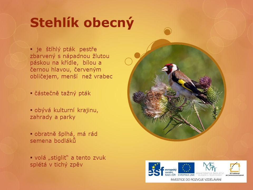 Stehlík obecný je štíhlý pták pestře zbarvený s nápadnou žlutou páskou na křídle, bílou a černou hlavou, červeným obličejem, menší než vrabec.