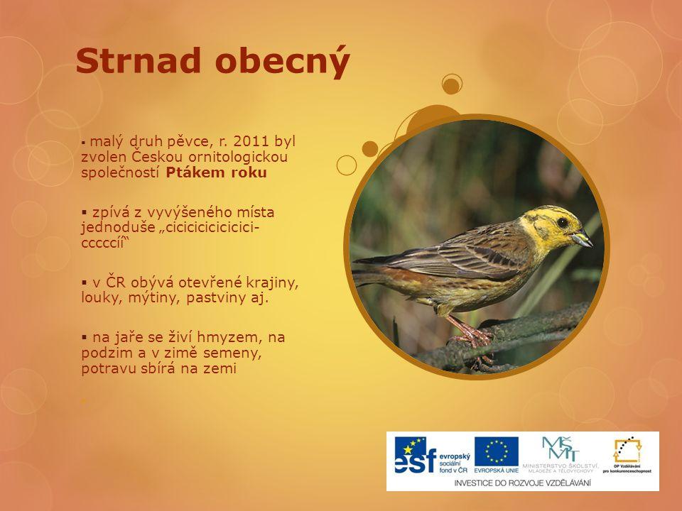 Strnad obecný malý druh pěvce, r. 2011 byl zvolen Českou ornitologickou společností Ptákem roku.