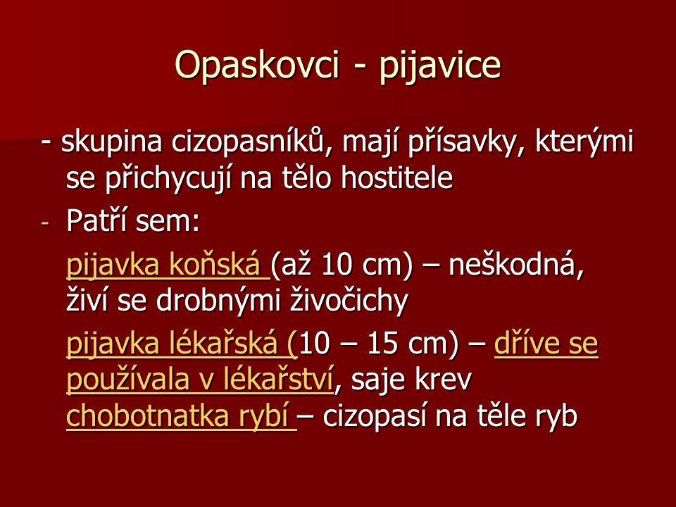 Opaskovci - pijavice - skupina cizopasníků, mají přísavky, kterými se přichycují na tělo hostitele.