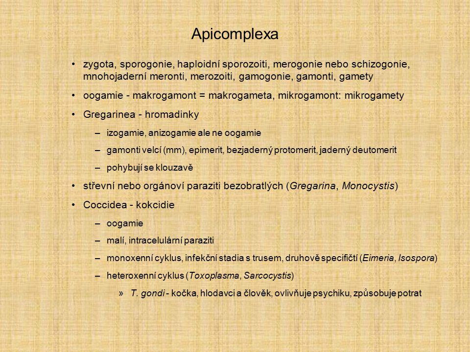 Apicomplexa zygota, sporogonie, haploidní sporozoiti, merogonie nebo schizogonie, mnohojaderní meronti, merozoiti, gamogonie, gamonti, gamety.