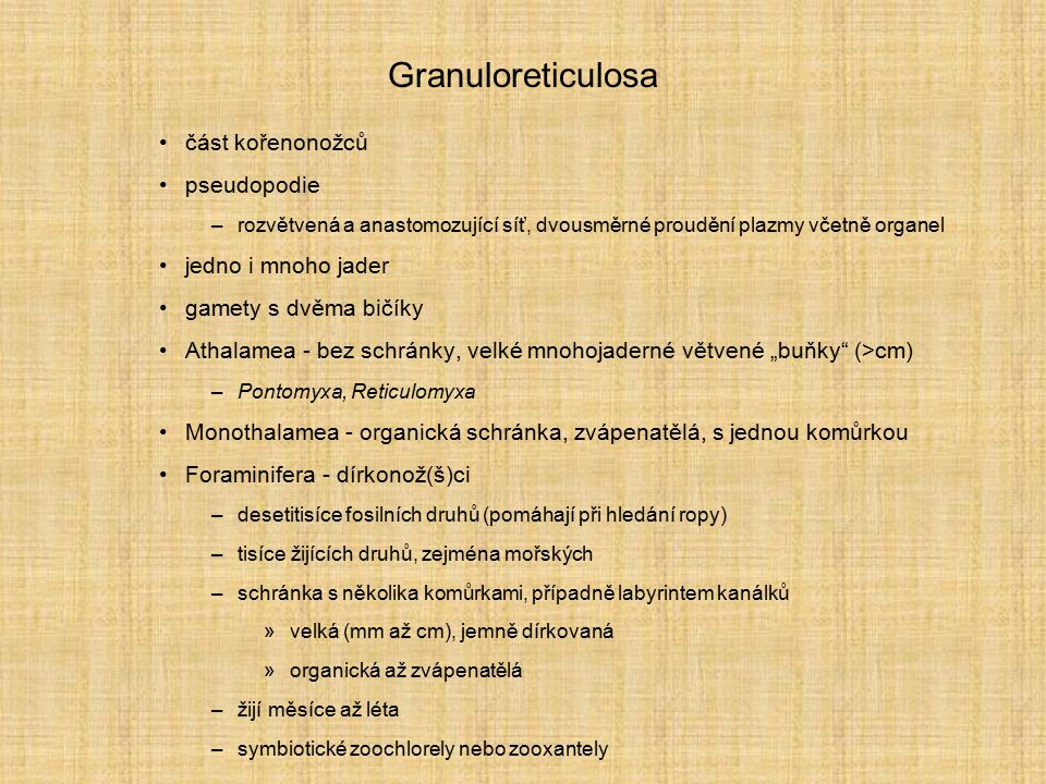 Granuloreticulosa část kořenonožců pseudopodie jedno i mnoho jader