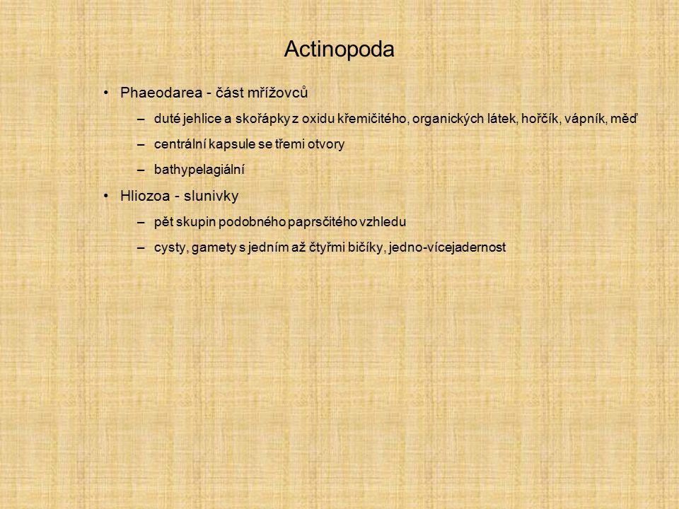 Actinopoda Phaeodarea - část mřížovců Hliozoa - slunivky