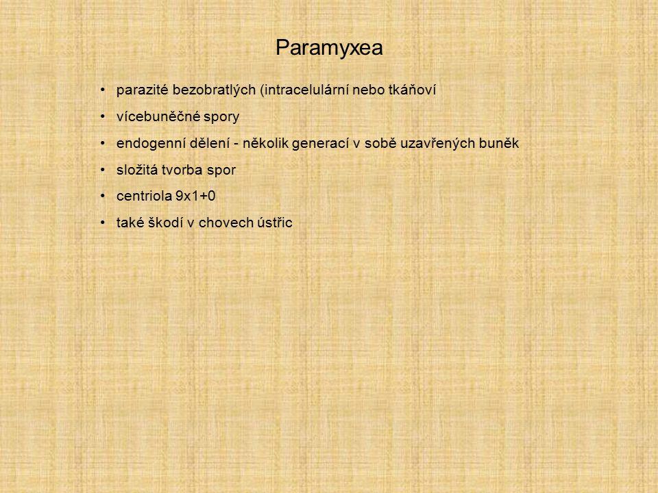 Paramyxea parazité bezobratlých (intracelulární nebo tkáňoví