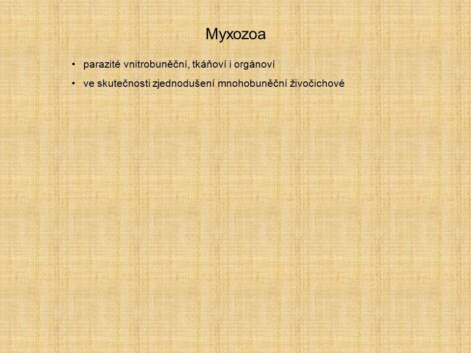 Myxozoa parazité vnitrobuněční, tkáňoví i orgánoví