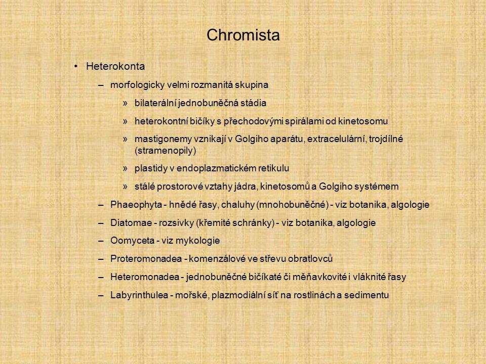 Chromista Heterokonta morfologicky velmi rozmanitá skupina