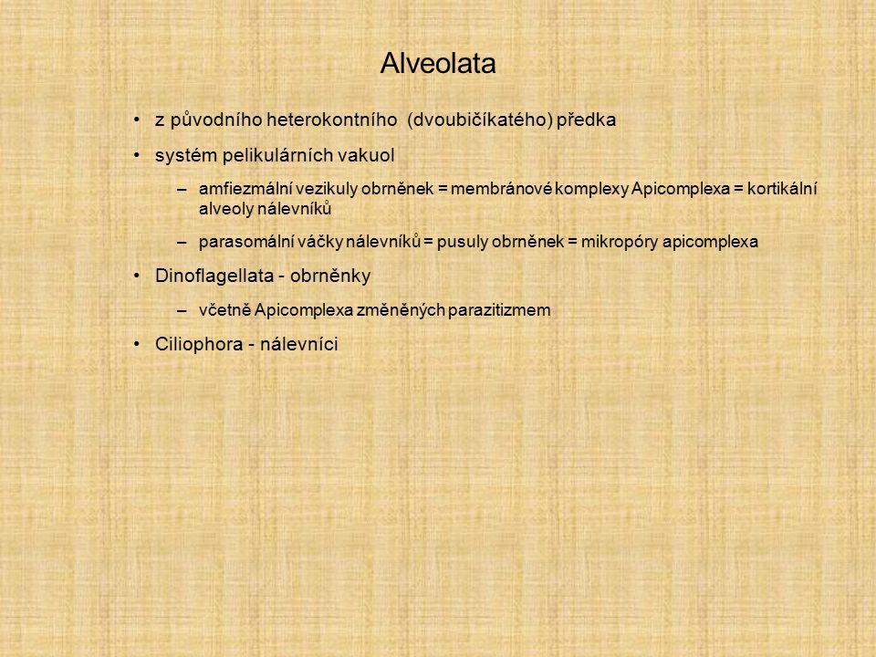 Alveolata z původního heterokontního (dvoubičíkatého) předka
