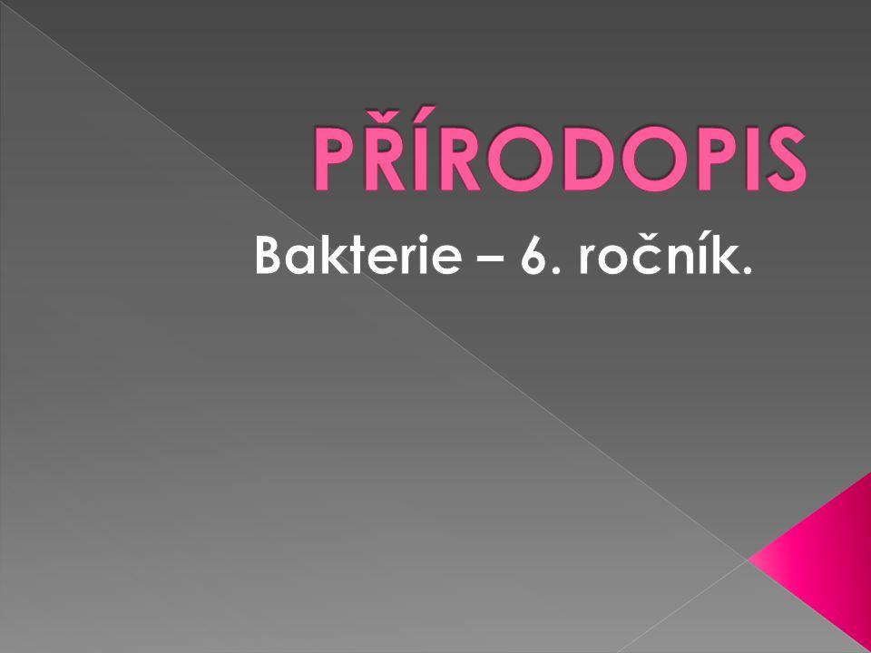 PŘÍRODOPIS Bakterie – 6. ročník.