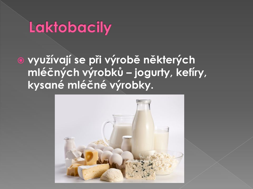 Laktobacily využívají se při výrobě některých mléčných výrobků – jogurty, kefíry, kysané mléčné výrobky.