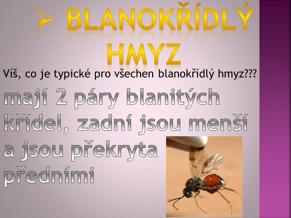 blanokřídlý hmyz. Víš, co je typické pro všechen blanokřídlý hmyz .