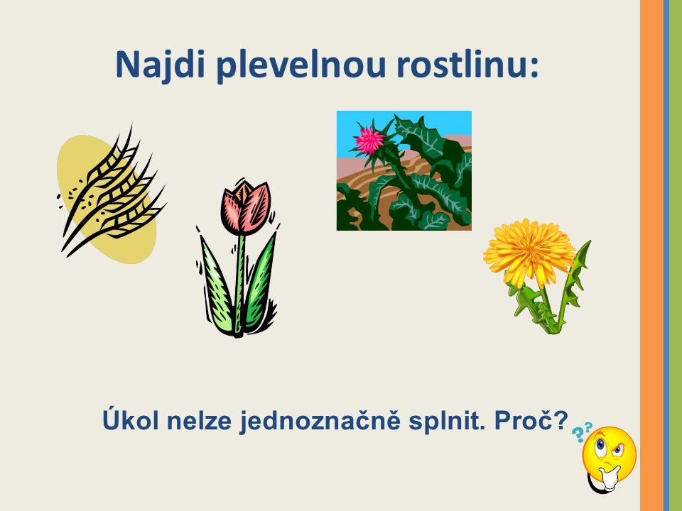 Najdi plevelnou rostlinu: