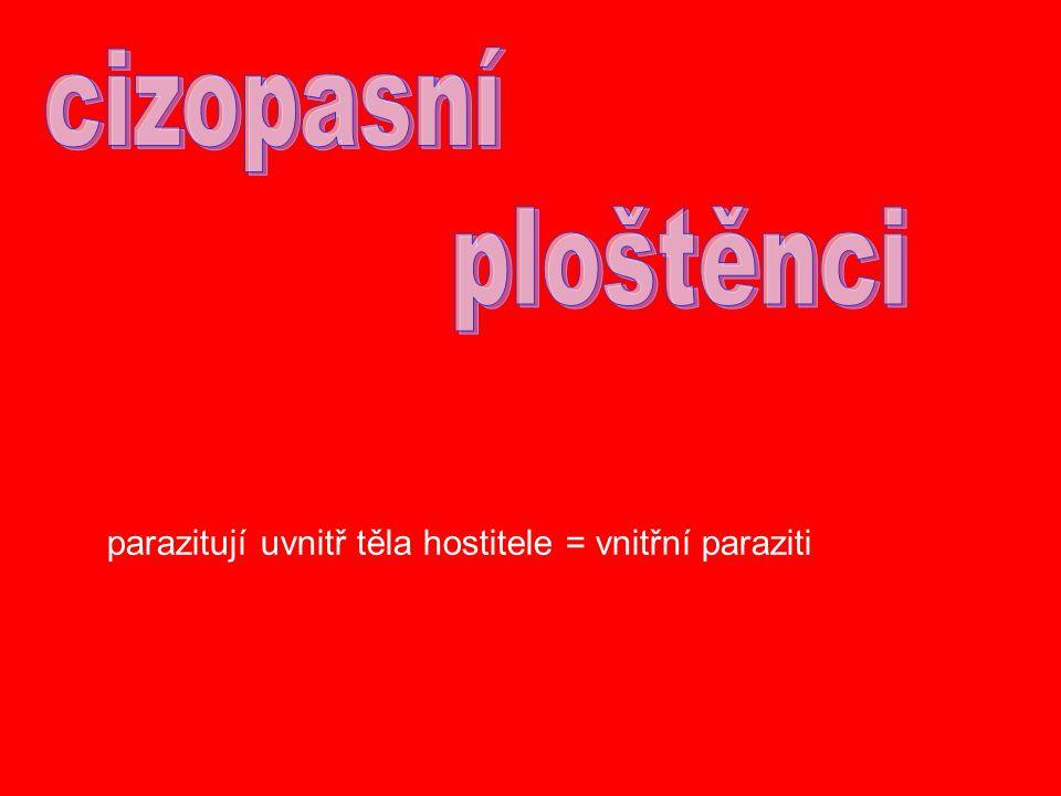 cizopasní ploštěnci parazitují uvnitř těla hostitele = vnitřní paraziti