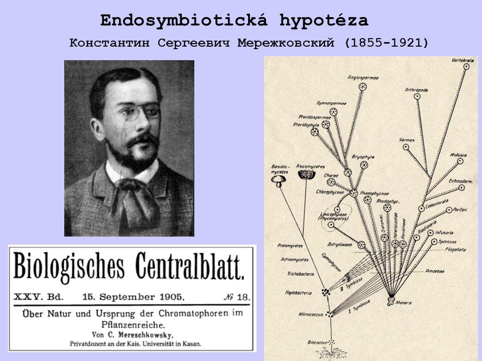 Endosymbiotická hypotéza