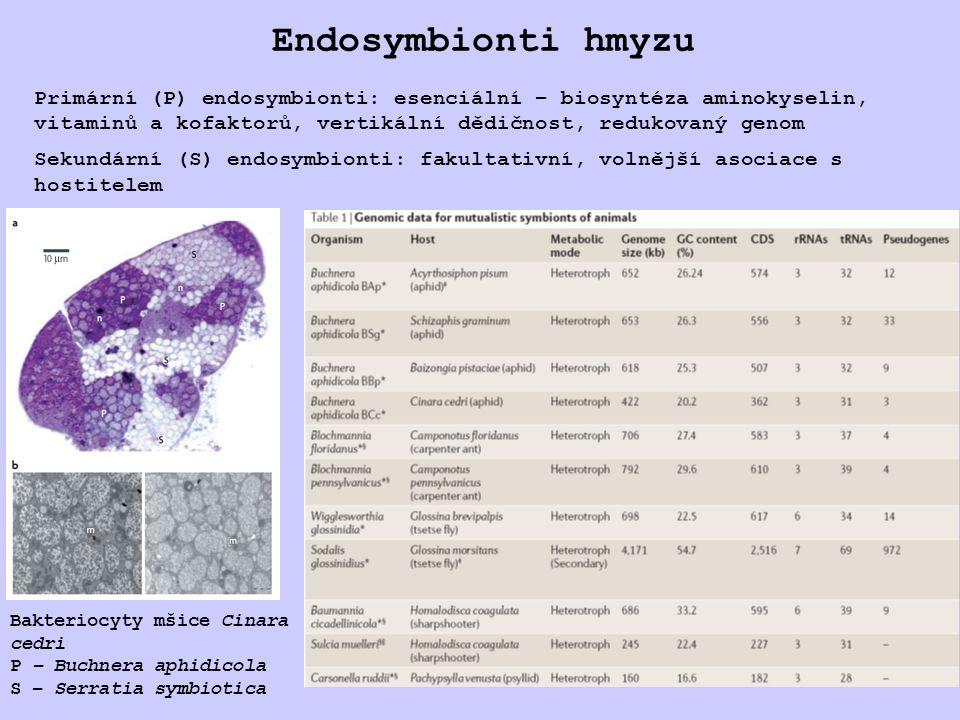 Endosymbionti hmyzu Primární (P) endosymbionti: esenciální – biosyntéza aminokyselin, vitaminů a kofaktorů, vertikální dědičnost, redukovaný genom.
