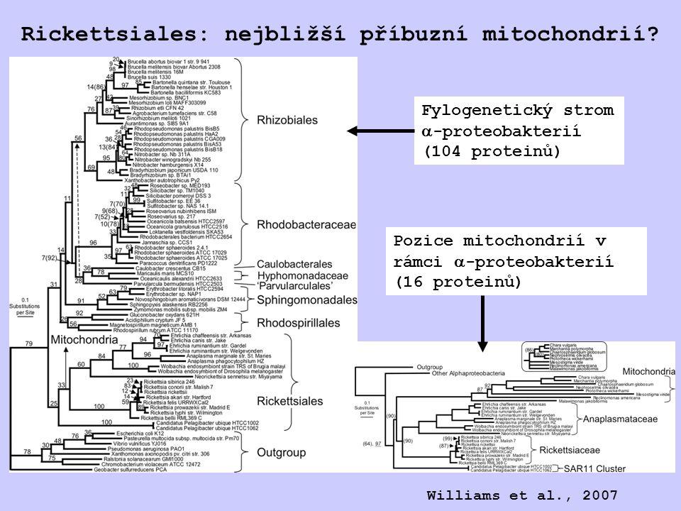 Rickettsiales: nejbližší příbuzní mitochondrií