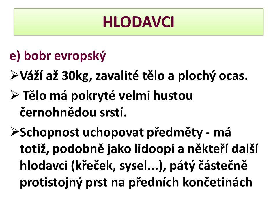 HLODAVCI e) bobr evropský Váží až 30kg, zavalité tělo a plochý ocas.