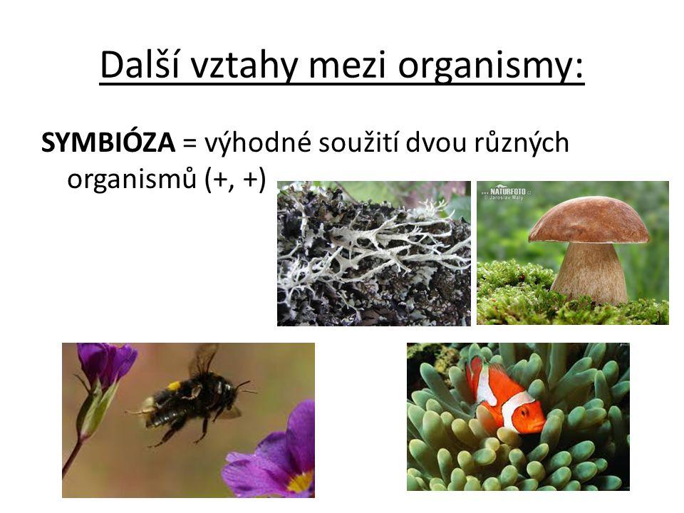 Další vztahy mezi organismy: