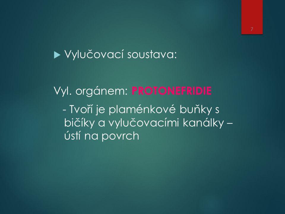 Vylučovací soustava: Vyl. orgánem: PROTONEFRIDIE.