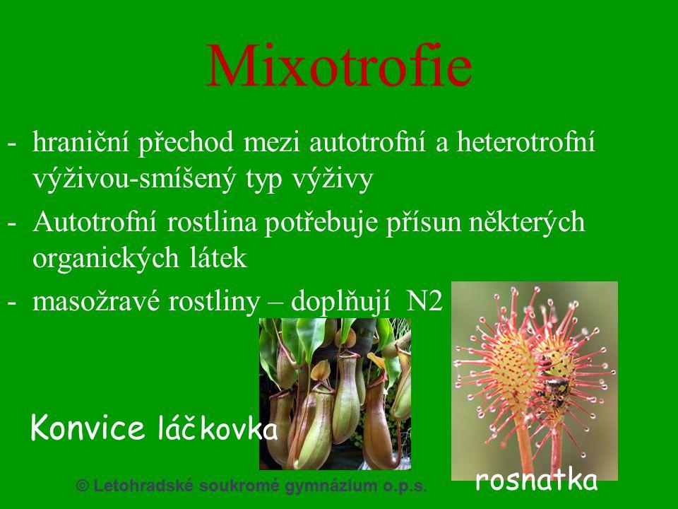 Mixotrofie Konvice láčkovka