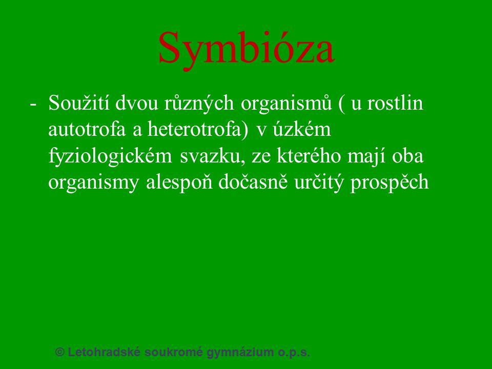 Symbióza