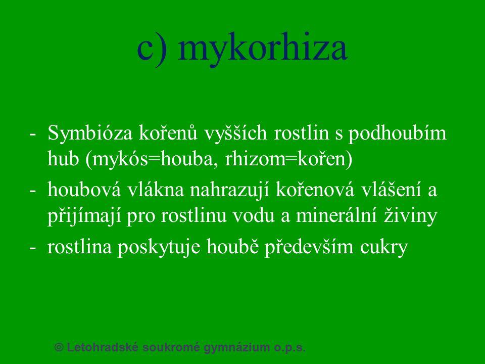 c) mykorhiza Symbióza kořenů vyšších rostlin s podhoubím hub (mykós=houba, rhizom=kořen)
