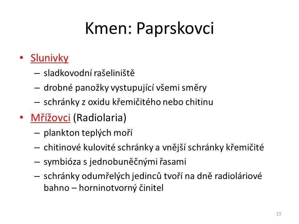 Kmen: Paprskovci Slunivky Mřížovci (Radiolaria)