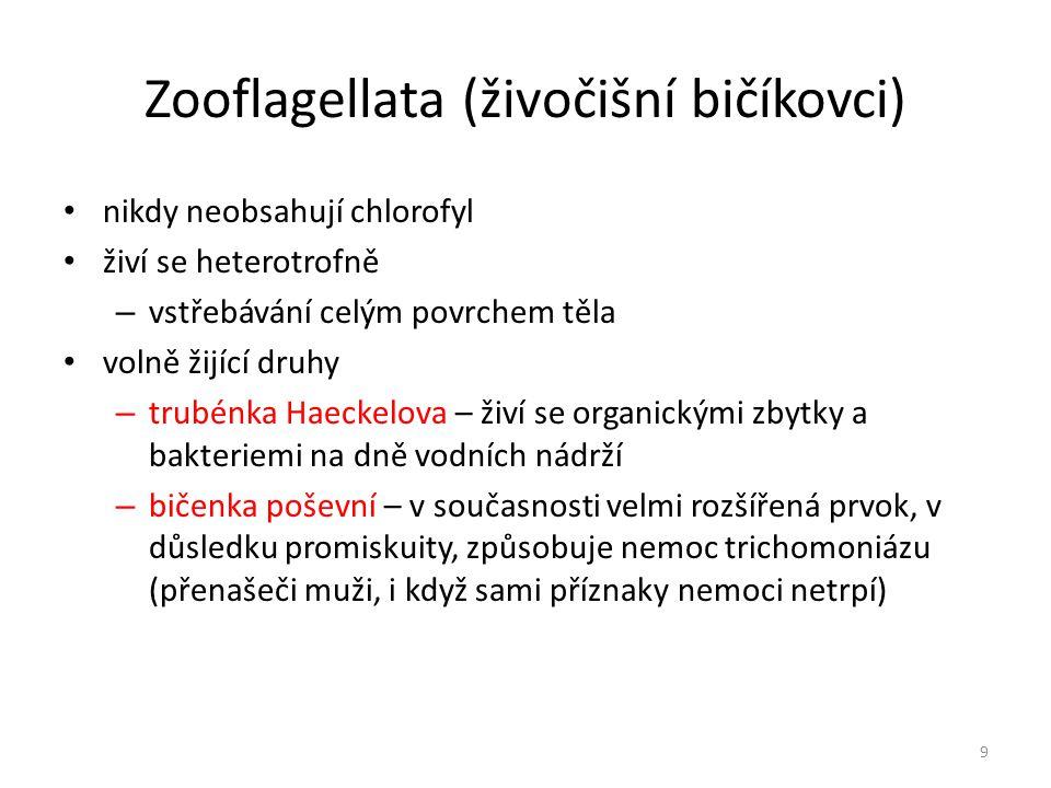 Zooflagellata (živočišní bičíkovci)