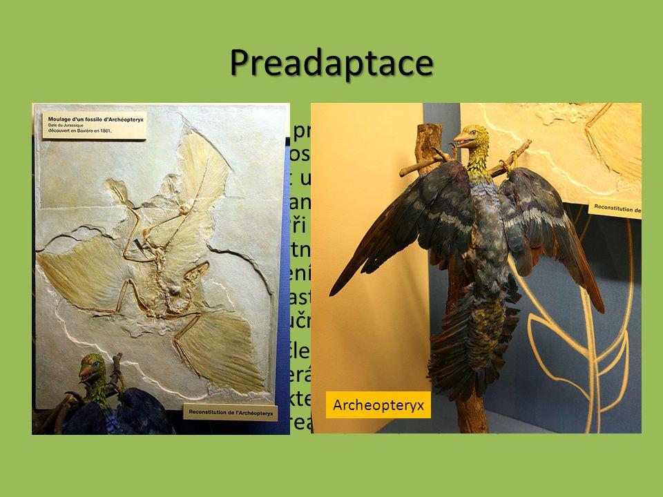 Preadaptace