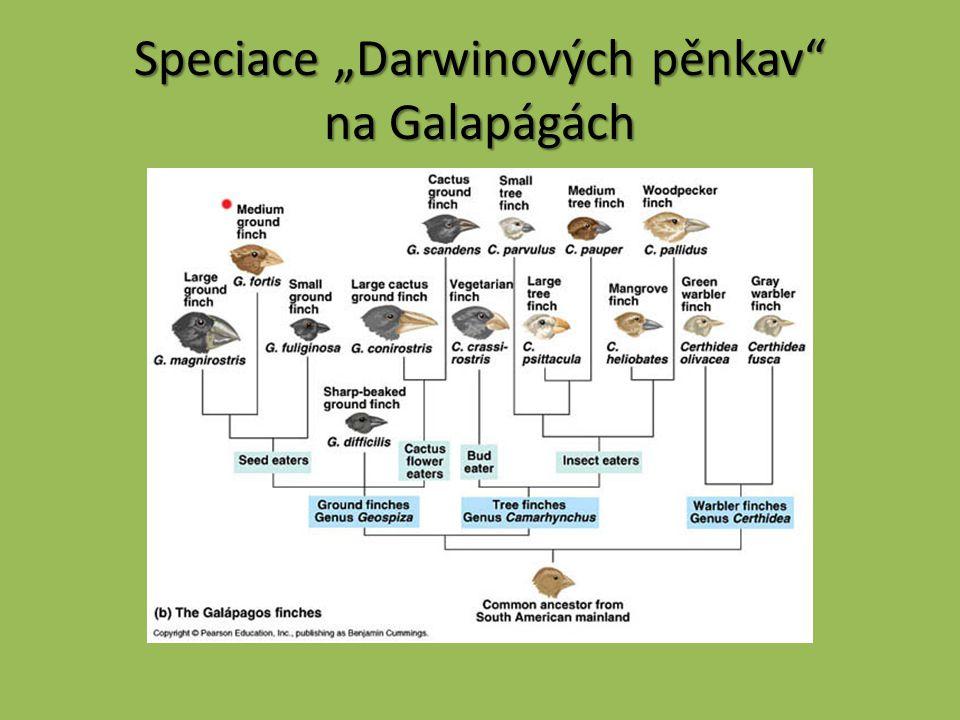 """Speciace """"Darwinových pěnkav na Galapágách"""