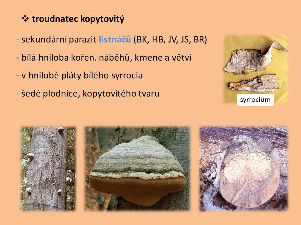 troudnatec kopytovitý