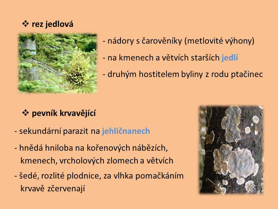 rez jedlová - nádory s čarověníky (metlovité výhony) - na kmenech a větvích starších jedlí. - druhým hostitelem byliny z rodu ptačinec.