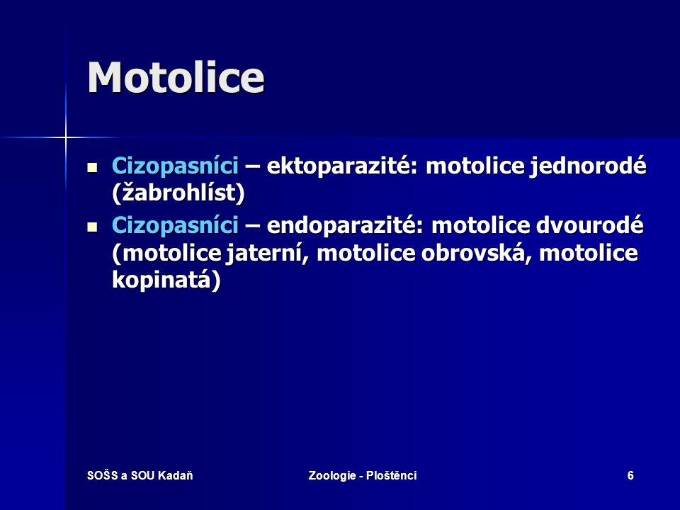 Motolice Cizopasníci – ektoparazité: motolice jednorodé (žabrohlíst)
