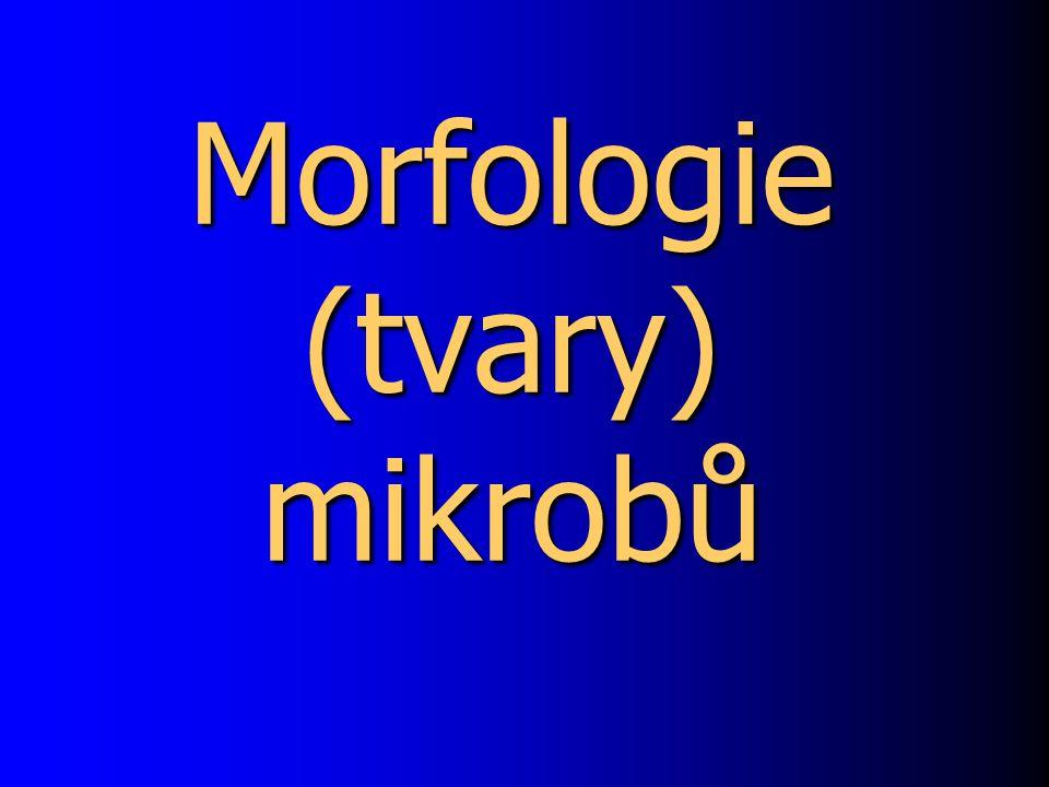 Morfologie (tvary) mikrobů