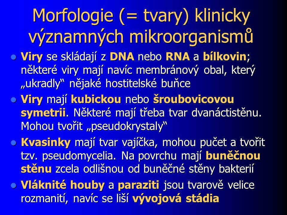 Morfologie (= tvary) klinicky významných mikroorganismů